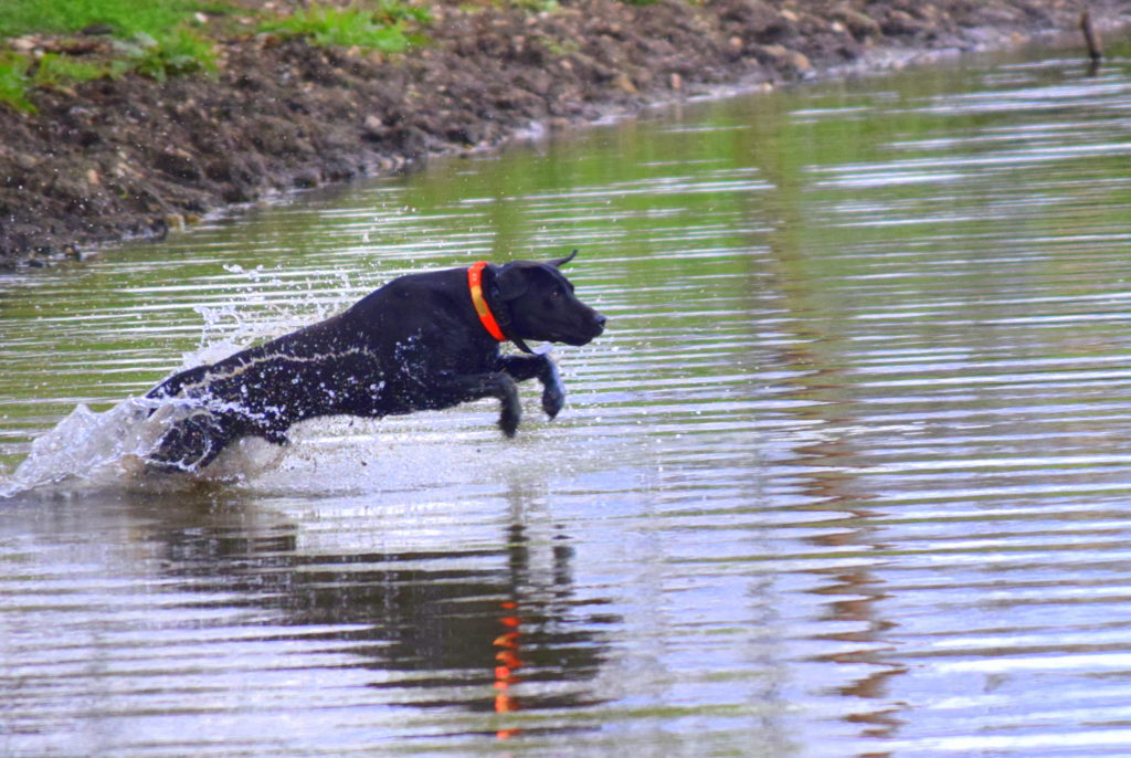 black dog side water entry